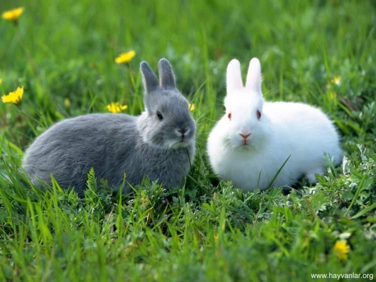tavşan öldürmek