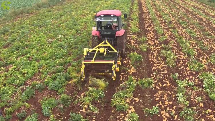 topraktan patates sökmek