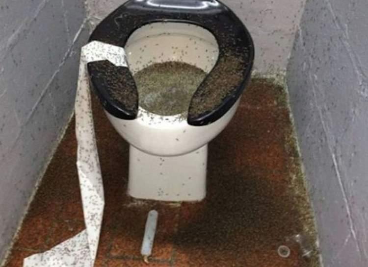 tuvalette böcek görmek