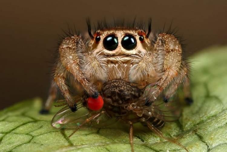Rüyada Uçan Örümcek Görmek