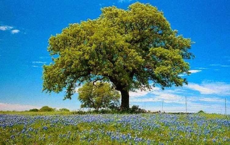 ulu ağaç görmek