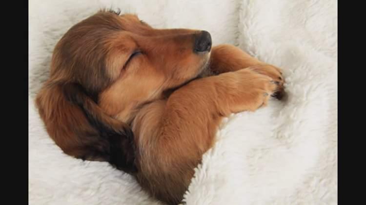 Rüyada Uyuyan Köpek Görmek