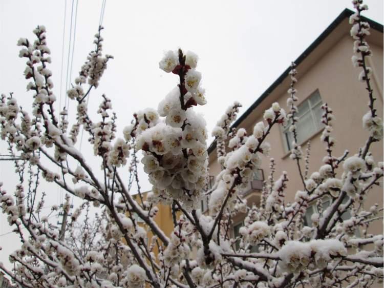 Rüyada Üzerine Kar Yağdığını Görmek