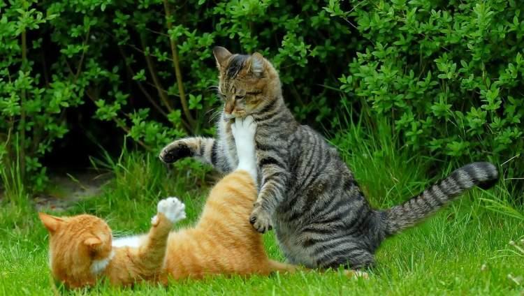 üzerine kedi atlaması