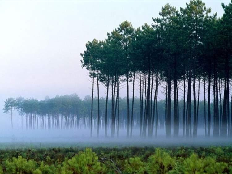 uzun ağaçlar görmek