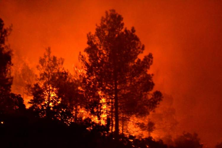 yanan ağaç görmek