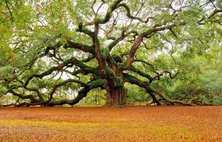 yaşlı ağaç görmek