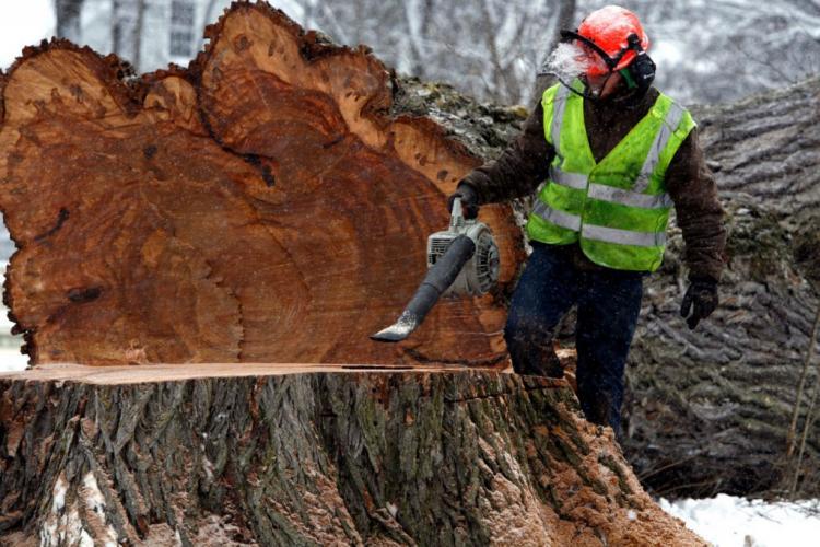 yaşlı ağaç kesmek