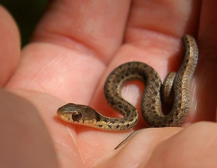 yavru yılan öldürmek