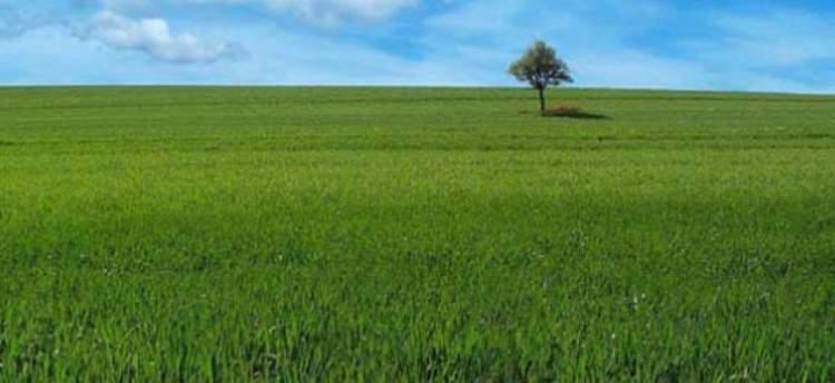 yeşil arazi görmek