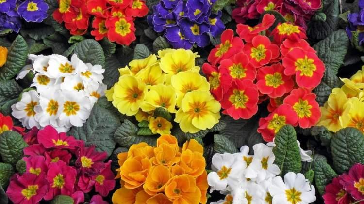 yeşil çiçek bahçesi görmek