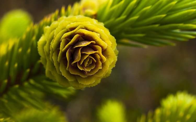 yeşil çiçek görmek