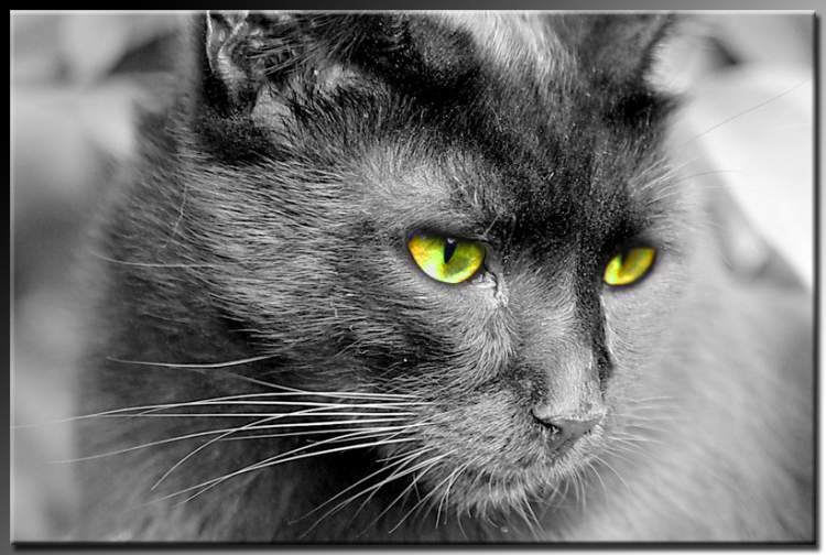 yeşil gözlü kedi görmek