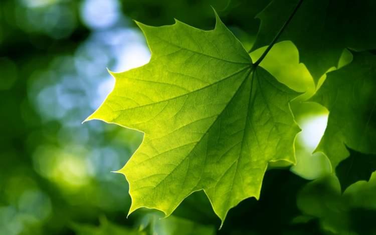 yeşil yaprak görmek