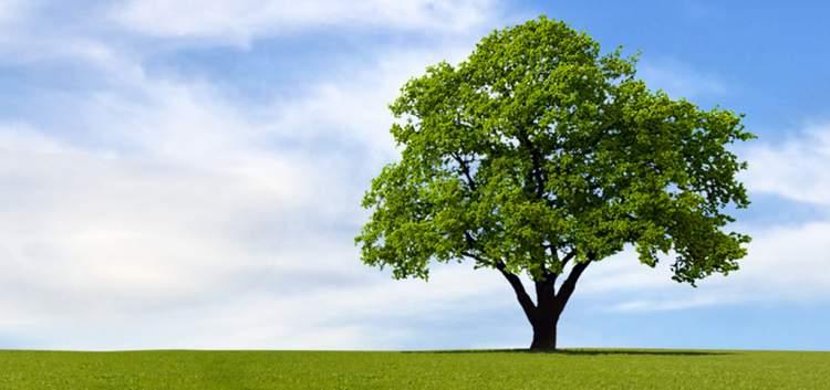 yeşil yapraklı ağaç görmek