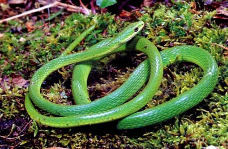 yeşil yılan görmek