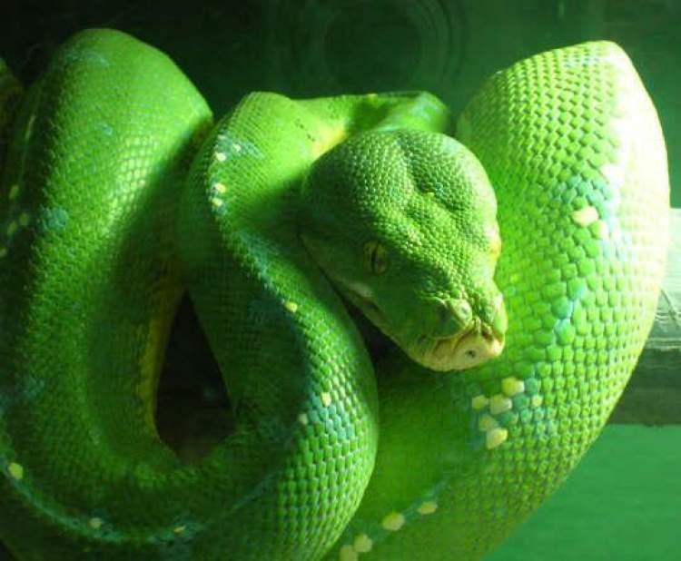 yeşil yılan öldürmek
