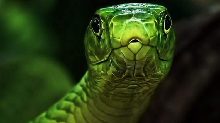 yılan başı kesmek