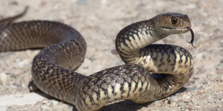 yılan beslediğini görmek