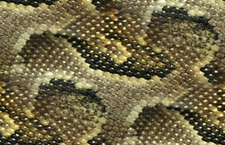yılan derisi görmek
