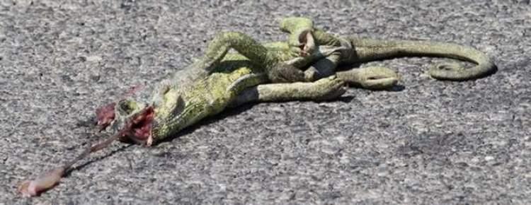 yılan ezmek