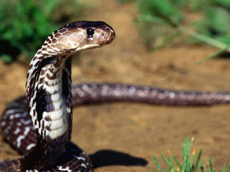 yılan görmek siyah yılan