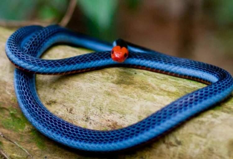 yılan görmek ve öldürmek
