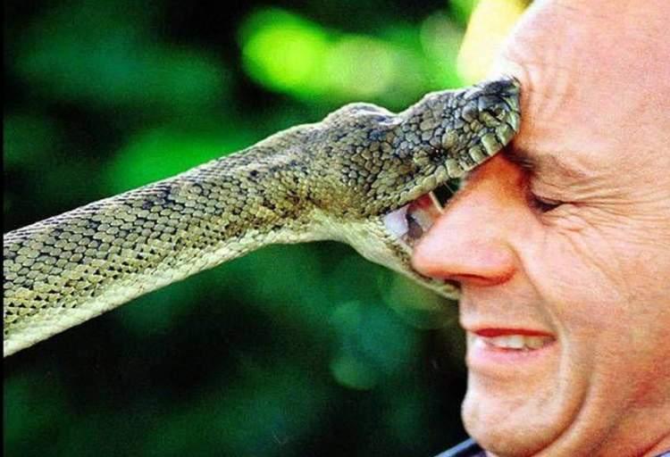 yılan ısırması