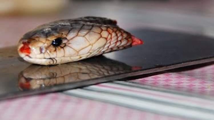 yılan kesmek