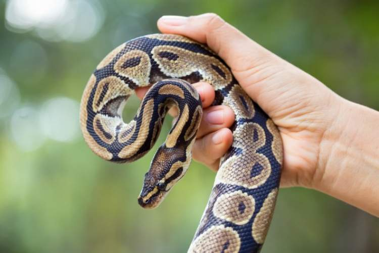 yılan öldürmeye çalıştığını görmek