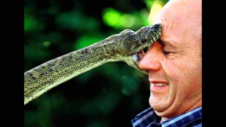 yılan tarafından kovalanmak