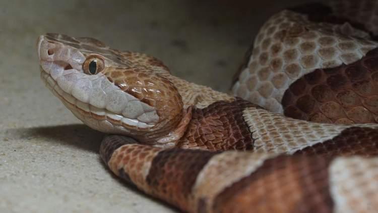 yılan yakmak