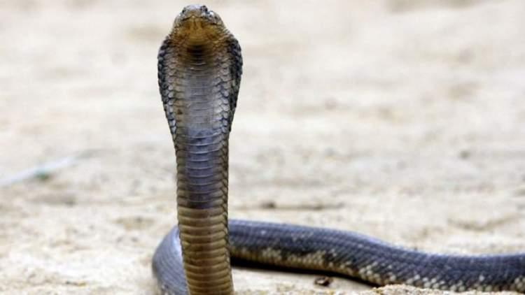 yılanı tutmak