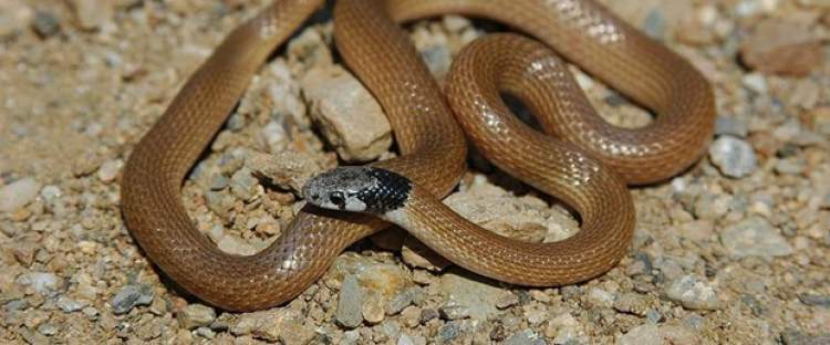 yılanın elini ısırdığını görmek