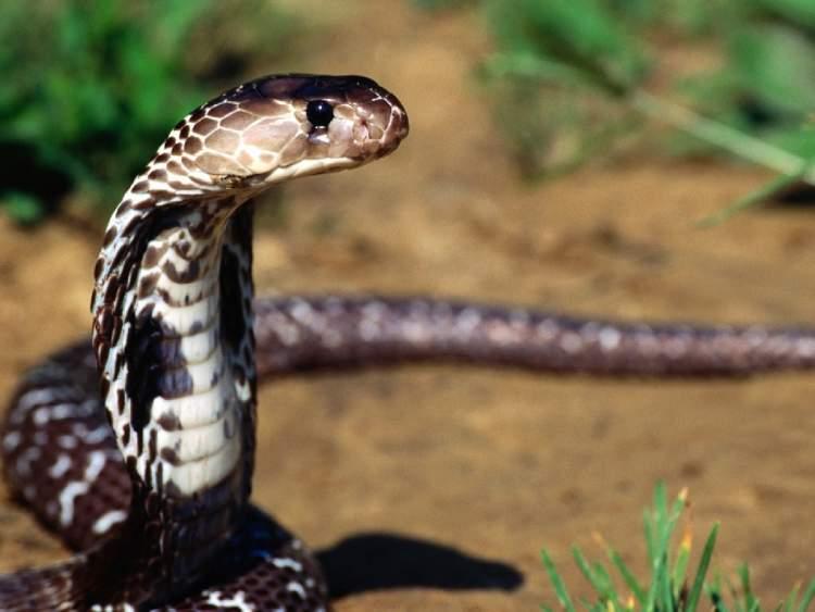 yılanın kafasını ezmek