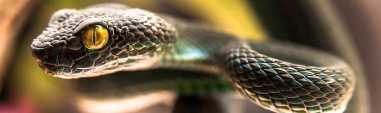 yılanın kafasını kesmek