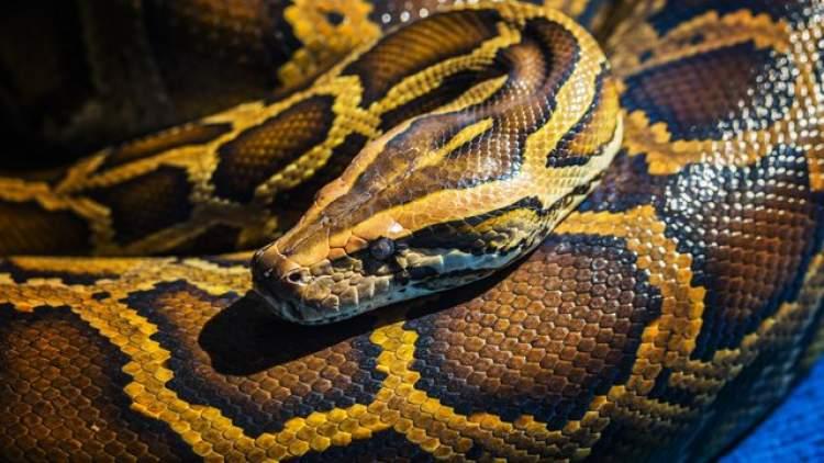 yılanın kovaladığını görmek