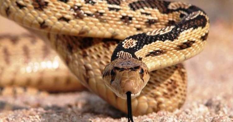 yılanla konuşmak