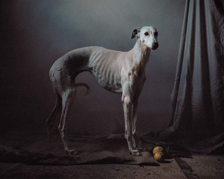 zayıf köpek görmek