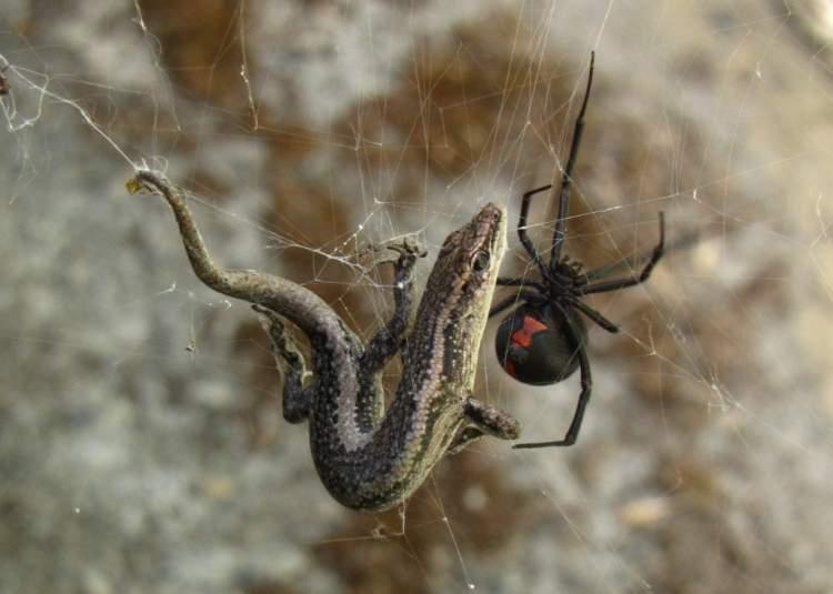 zehirli böcek görmek