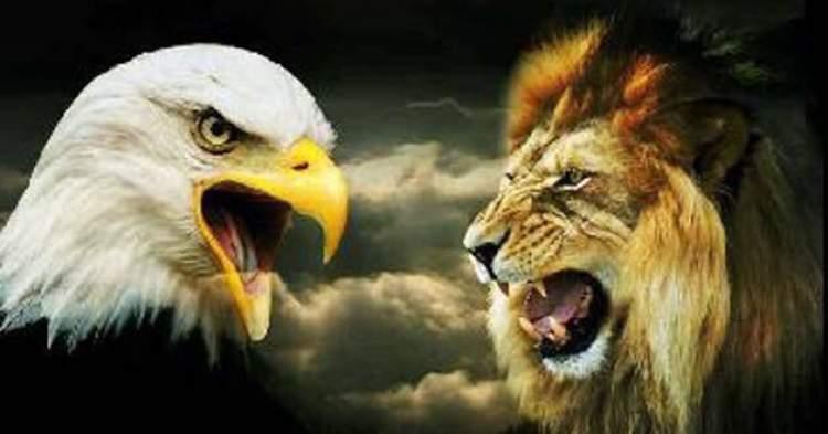 aslan ve kartal görmek