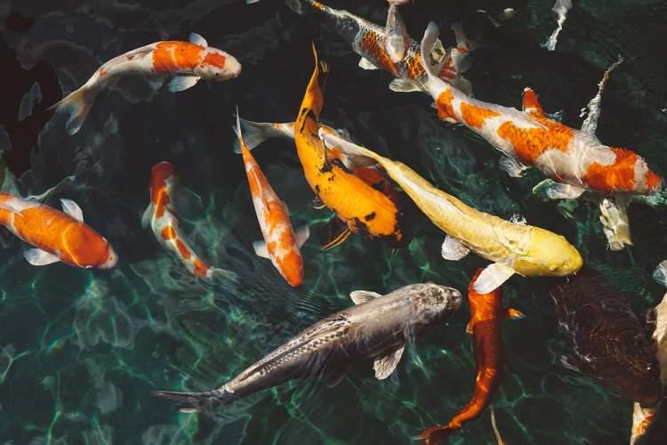 balık canlı balık görmek