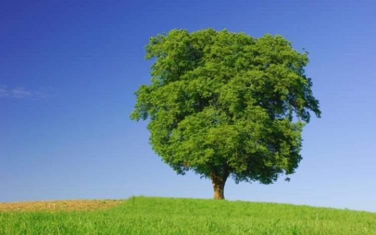 baltayla ağaç kesmek