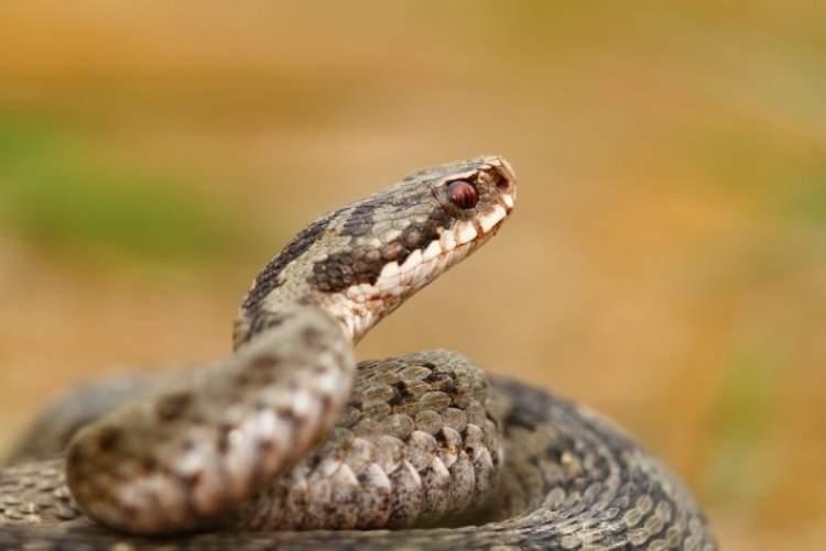 elinde küçük yılan tutmak