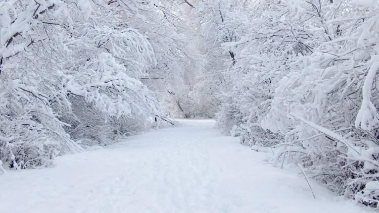 kardan kaymak