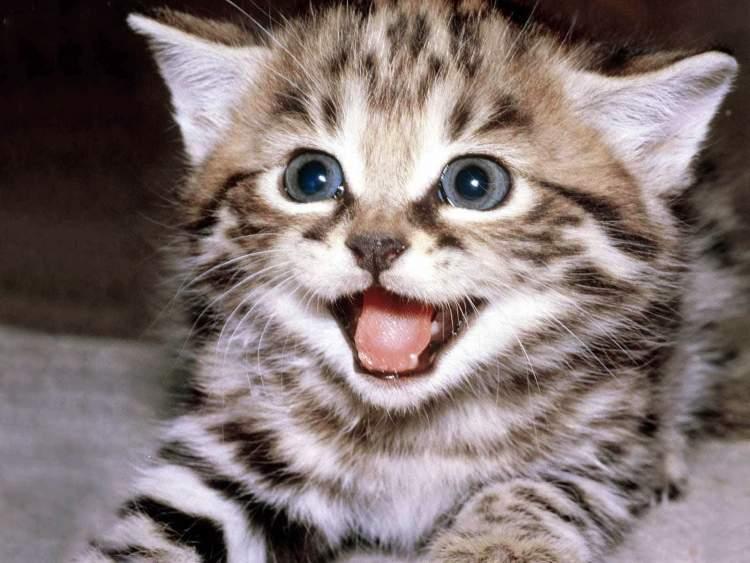 kedi görmek kedi yavrusu görmek