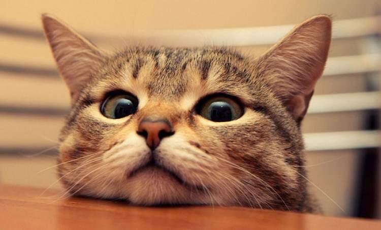kedi görmek kediyi öldürmek