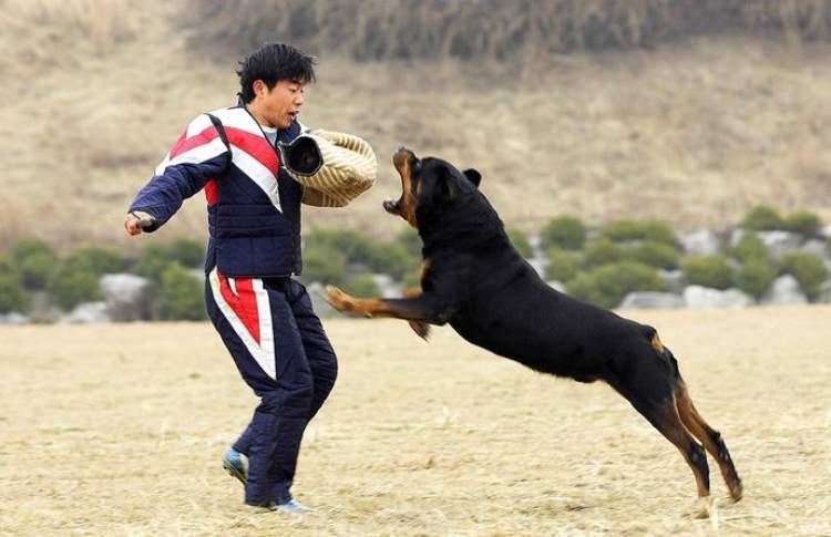 köpek görmek ve saldırması