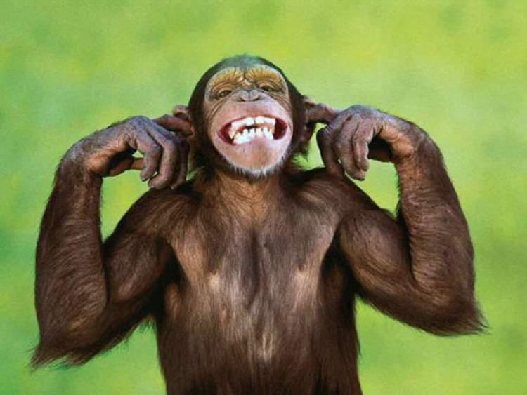 küçük sevimli maymun görmek
