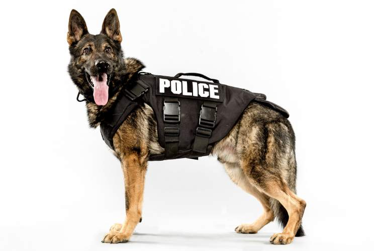 Rüyada Polis Köpeği Görmek